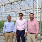 Cajamar y Signify desarrollan luz artificial en invernaderos para generar más y mejor